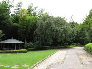 matsudo-4.jpg