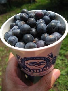 blueberry-4.jpg