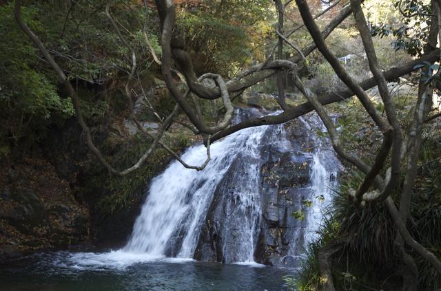 hananuki-5.jpg